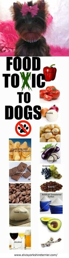Foods Toxic To Dogs. #healthy #pets