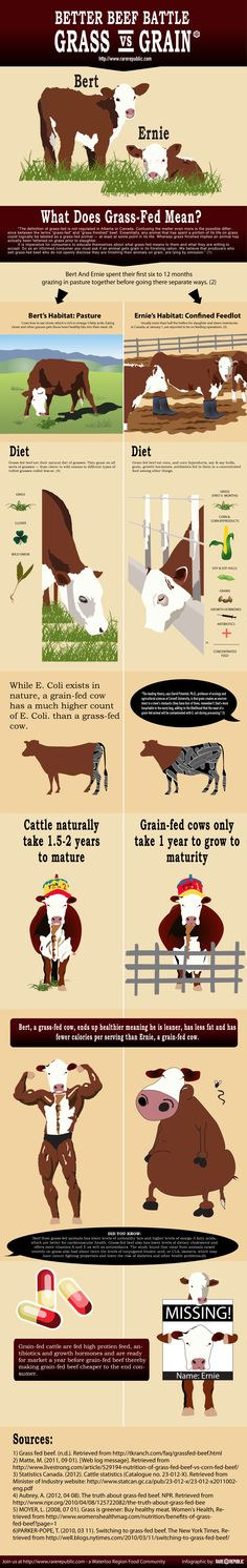 The Ultimate Guide to Grass Fed Beef - Rare Republic