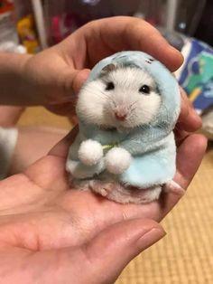 Hamster wearing a hoodie. Hamster wearing a hoodle - Animals Baby Animals Super Cute, Cute Little Animals, Cute Funny Animals, Baby Animals Pictures, Cute Animal Photos, Animals And Pets, Animal Pics, Bizarre Animals, Fluffy Animals
