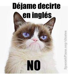 Grumpy Cat in Spanish meme in spanish Spanish Teacher Memes Cat In Spanish, Spanish Jokes, Funny Spanish Memes, Funny Memes, Learn Spanish, Memes Humor, Spanish Lessons, Spanish Idioms, Spanish Posters