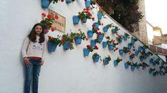 Geranios - Marbella