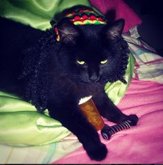"""""""When you smoke the herb, it reveals you to yourself."""" 