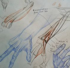 "My friend and student Jon Marshall brought in a great set of hand studies after various masters. We talked about various difficult spots including the knuckles and the ""snuff box"". Jon's drawings are in blue, my notes are in red and black."