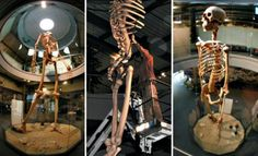 ECUADOR GIANTS SHOWN TO THE WORLD In Loja province, Southern Ecuador and Peru border, many strange relics have been uncovered.  Bones and full skeletons very similar to those of humans but of incredible size. SEVEN TIMES THE SIZE OF A MODERN HUMAN,,,