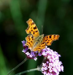 butterflies...  Best Ten Plants to attract Butterflies into your Garden..