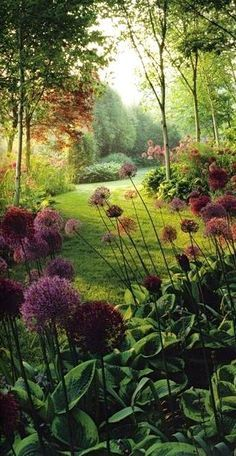 Old Hat - Allium and hostas - one of our favourite combinations! Wish the slugs didn't like it as much...