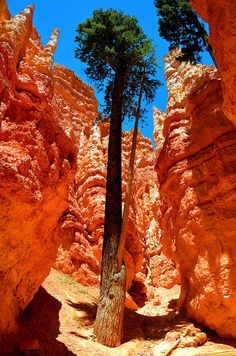 Amphitheater at Bryce Canyon, Utah