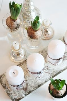 Hyacinths - Christmas table setting
