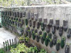 ideia de como fazer uma horta com garrafas
