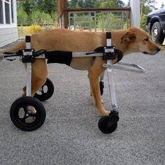31 Best Dog Wheel Chairs images in 2015 | Chairs, Diy dog
