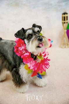 """Luau"" Roxy! She is most definitely a beach lovin dog!"