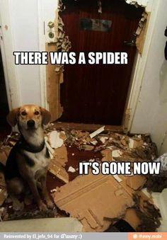 The Exterminator....