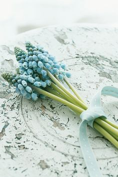 Grape hyacinth posy