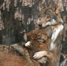 The Unexpected Nuzzle | The 33 Most Important Cuddling Positions