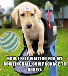Bowling Quotes, Bowling Accessories, Bowling Bags, How I Feel, Feelings, Memes, Funny, Meme, Funny Parenting