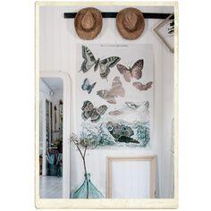 "Affisch med ""papillons diurnes"", 120 x 85 cm"