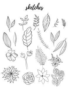 Free Botanical Drawings for Bullet Journaling – Liz Kohler Brown Flower Sketches, Art Drawings Sketches, Doodle Drawings, Easy Drawings, Pencil Drawings, Tattoo Drawings, Tattoos, Leaf Drawing, Floral Drawing