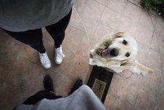 Ask A Vet: Why Does My Dog Follow Me Everywhere? #dogtrainingnearme