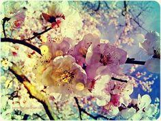as flores são da cor que tu quiseres