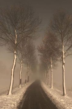 Nature, Girls, Quotes, Animals, things I like. Choose Your Path, Forest Path, Tree Line, Winding Road, Winter Trees, Winter Pictures, Winter Wonder, Pathways, Beautiful Landscapes