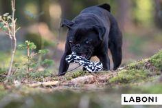 Spielzeugknochen gibt es viele, aber nur Bonnie Bone ist ein echter Kult-Charakter ✭ ausgezeichnet mit einem International Design Award ✭ TÜV geprüft für sicheren & gesunden Spielspass ✭ aus zahnpflegendem Baumwolltau ✭ zum Kauen, Werfen oder Apportieren ✭ maschinenwaschbar Kult, Dog Toys, French Bulldog, Dental, Dogs, Animals, Design, Toy, Animales