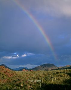 Rainbow, Organ Pipe Cactus; Organ Pipe Cactus National Monument, Arizona