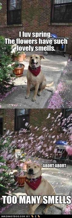 funny dog pictures - TOO MANY SMELLS!