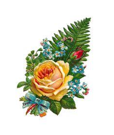 Antique Images: rose clip art