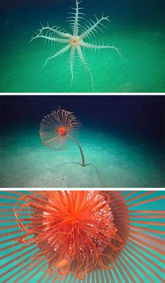 Western Coast, Colossal Art, Coast Australia, Deep Sea, Ecology, Under The Sea, Mother Nature, Habitats, Underwater
