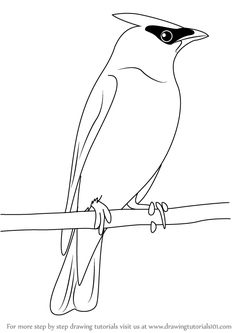 Perched Barn Owl Coloring Pages Printable