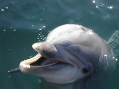 The Cove: The fight to end Japan's dolphin hunt