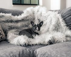 Our custom Waterproof Throw Blanket is a patent pending luxury dog blanket designed for your pet's comfort and relaxation with our signature ultra-soft faux fur sofa cover. Best Orthopedic Dog Bed, Orthopedic Pillow, Animal Print Bedding, Faux Fur Bedding, Dog Throw, Dog Pillow Bed, Dog Blanket, Jack Russell Terrier, Pet Beds