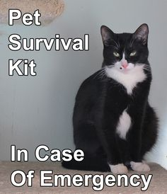 Are your pets prepared in the event of an emergency?  Do you have enough back-up pet food, water and meds?