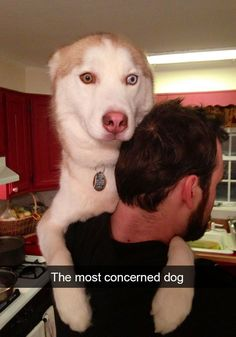 90 Funny Dog Snapchats Pictures #funnydogvideos
