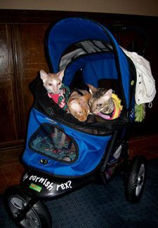 """The Things We Do for Love: """"My Cats Have Their Own Strollers"""""""