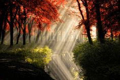 """""""That Same Other World"""" by Lars van de Goor, via 500px    A magical forest scene. The rays are so strong , you can even see the reflection in the water.  Rays are real, colors post processed in Aperture 3"""