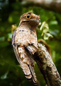 Creepy Animals, Funny Animals, Cute Animals, Pretty Birds, Beautiful Birds, Potoo Bird, Scary Fish, Big Bird, Trees To Plant