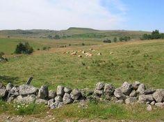 drellier. Plateau d'Aubrac