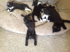 Sam, Tesla, Kuro and their other two siblings the day we rescued them