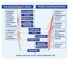 Natural immune system - Aptamil HCP