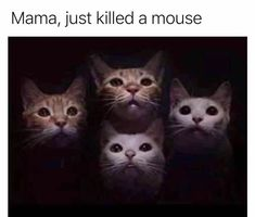 You Have Decided: Here Are The Best Cat Memes Of The Decade - Katzenrassen Beautiful Cats Best Cat Memes, Funny Animal Memes, Cute Funny Animals, Funny Cute, Funny Dogs, Funny Memes, Funny Sayings, Memes Humour, Cute Cat Memes