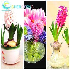 Купить товарСемена гиацинт Гиацинт восточный https://www.aliexpress.com/store/2392054?spm=2114.8147860.0.40.F41l6R Крытый зеленых растений, цветочных растений, легко расти 100 шт. Гиацинт семена в категории Карликовые деревьяна AliExpress. [xlmodel]-[обычай]-[36237]красивый Цветок Семена[xlmodel]-[обычай]-[36236]посадка Советымоя дорогая, этот продукт на про
