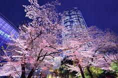 The Four seasons of Japan (日本語↓) 日本の四季 Sakura. Moon. Night. Last year I saw a very beautiful sakura's reflection photo that my friend  took, this year, I am determine to take one...Thanks for inspiration... 桜月夜 昨年、私は友達撮ったとても美しい桜が反射した写真を見ました、今年は、絶対にこれを撮ってみようと心に決めていました・・・インスピレーションをくださって、ありがとうございました・・・
