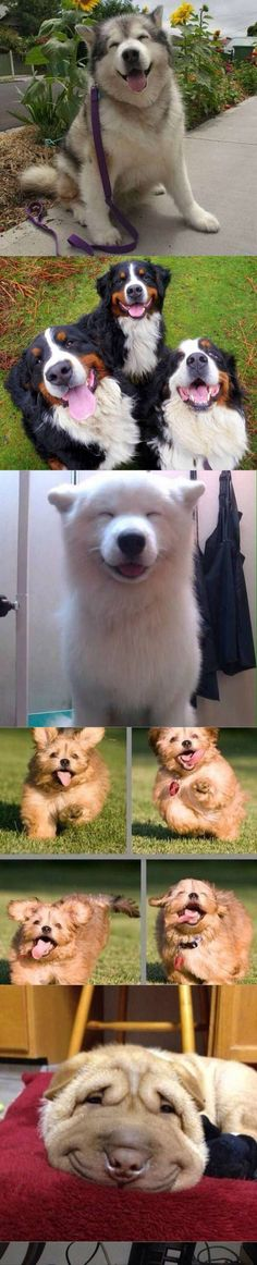 #puppy  #cute  #dog #nice  #pet  #animal  #happy  #beautiful  #putdownyourphone