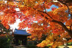 早朝特別拝観とライトアップ|そうだ 京都、行こう。~京都への旅行、観光スポットで京都遊び~