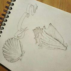Muschel Zeichnung