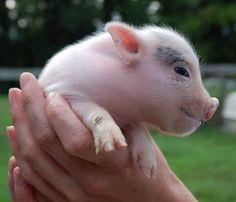 Meet friendly farm animals