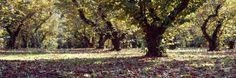 Trees in a Park, Oregon, USA Lámina fotográfica