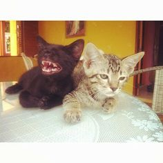 …and thankfully they'll laugh at your jokes.   An Ode To Coffeeshop Cats