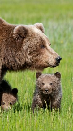 "Bear Cub: ""Mom! What on earth is that over there?!"""